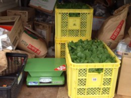 Local farmers donated 24 kilograms of spinach for our operations in Ishinomaki, Miyagi!